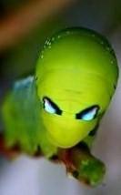 alien_caterpillar